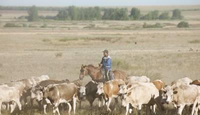 Пастуха выпускного возраста отправили в первый класс