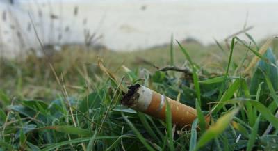 Экологи предупредили о вреде окурков для природы