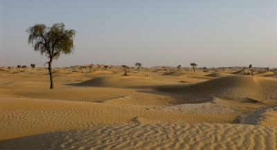 Пустыня Сахара может стать зеленой и плодородной