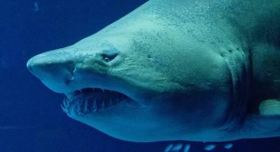 На ребёнка в Калифорнии напала акула