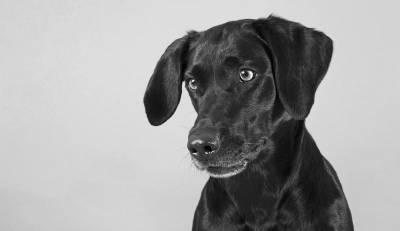 Собака спасла осуждённого за насилие сантехника