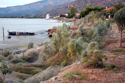 Туристов в Греции напугала гигантская паутина