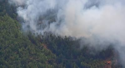 В Германии две недели горит принадлежащий бундесверу лес