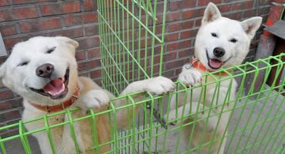 Ким Чен Ын подарил лидеру Южной Кореи двух «диких» собак