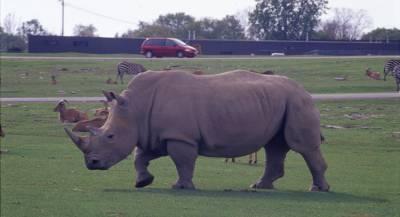 Премьер-министр Венгрии «усыновил» носорога