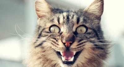 Власти Кипра предложили туристам кормить бродячих котов