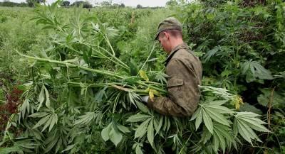 Украина превращается в вотчину наркобаронов