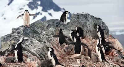 Китай построит постоянный аэропорт в Антарктиде