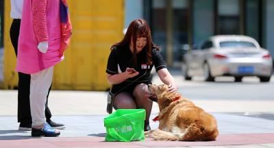 Китайцам запретили выгуливать собак днём