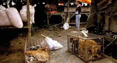 Власти Южной Кореи уничтожили крупнейшую бойню собак