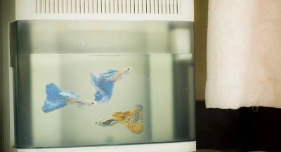 Депутат Рады назвал Украину аквариумной рыбкой