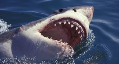 Серфингиста в Австралии атаковала акула