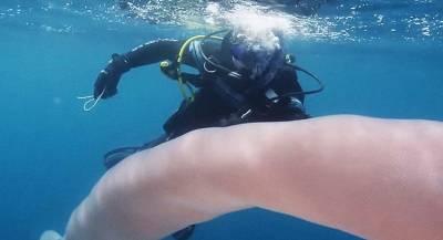 Морской монстр попал на видео в Новой Зеландии