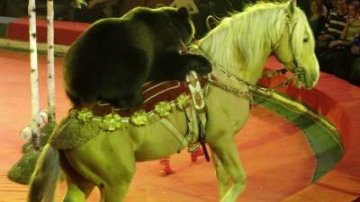 Цирковые номера с дикими животными запретят в Чехии