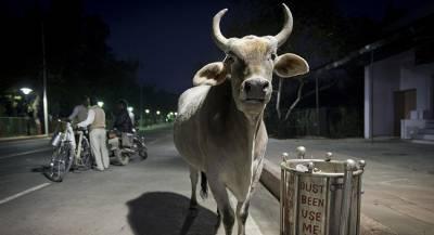 Коровий навоз угрожает авиасообщению Эстонии